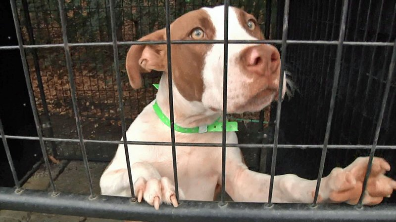There's a right way and a wrong way to surrender a pet in Denison. (KTEN)