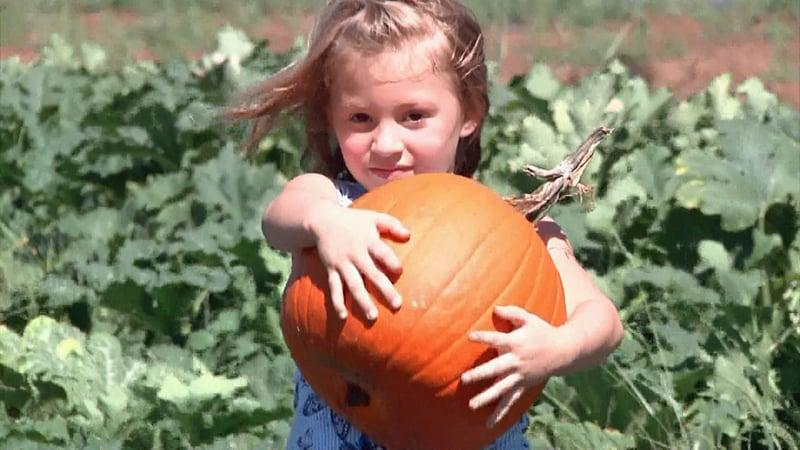 Someone found the perfect pumpkin at Wild Berry Farm in Sadler. (KTEN)
