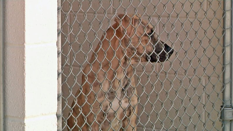 Pets at the Sherman Animal Shelter will no longer be subject to euthaniziation except in specific circumstances. (KTEN)