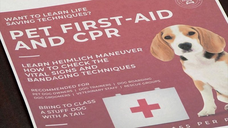 Marshall County plans to offer classes in first aid for pets. (KTEN)