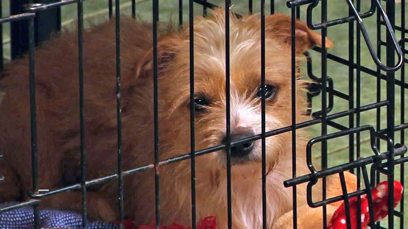 PAWS expects a big demand for adoptable pets during the holiday season. (KTEN)