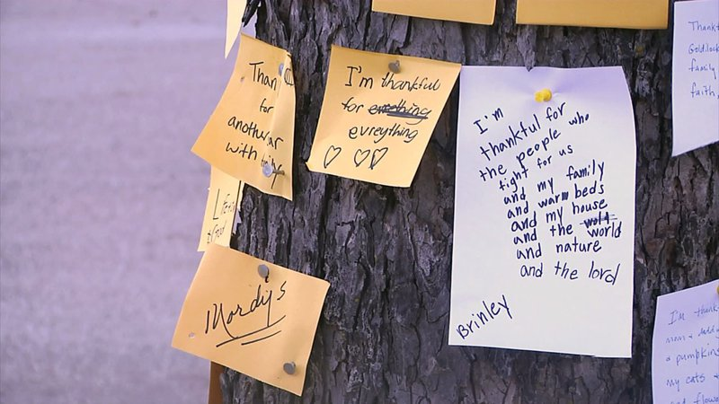 """Notes nailed to Ardmore's """"Thankful Tree."""" (KTEN)"""